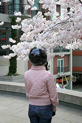 image-of-girl-looking-at-cherry-blossoms-courtesy-of-piero-sierra