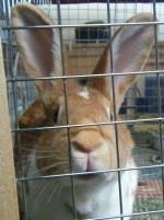 yoanna-bunny-062409