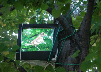 Jesse-Wagstaff-digital-bird1