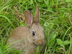 rabbit photo courtesy epicnom at flickr