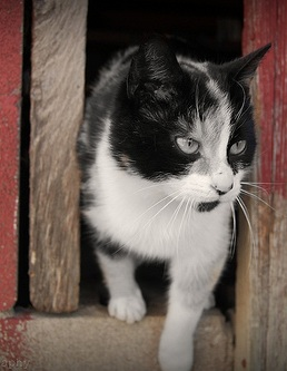 Image of cat courtesy of Forty Two, via Flickr.