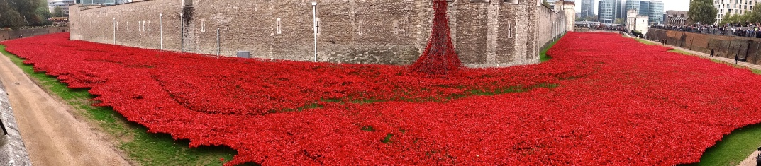 Poppy panorama by Phil Guest via Flikr