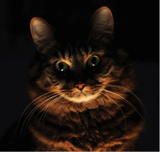 Image of Spooky Cat Coutesy Laura d'Allesandro via Flickr